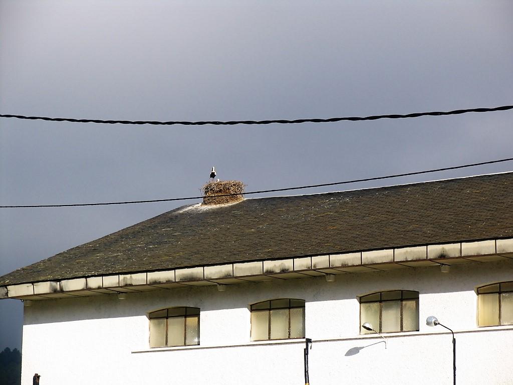 Cigüeñas 4