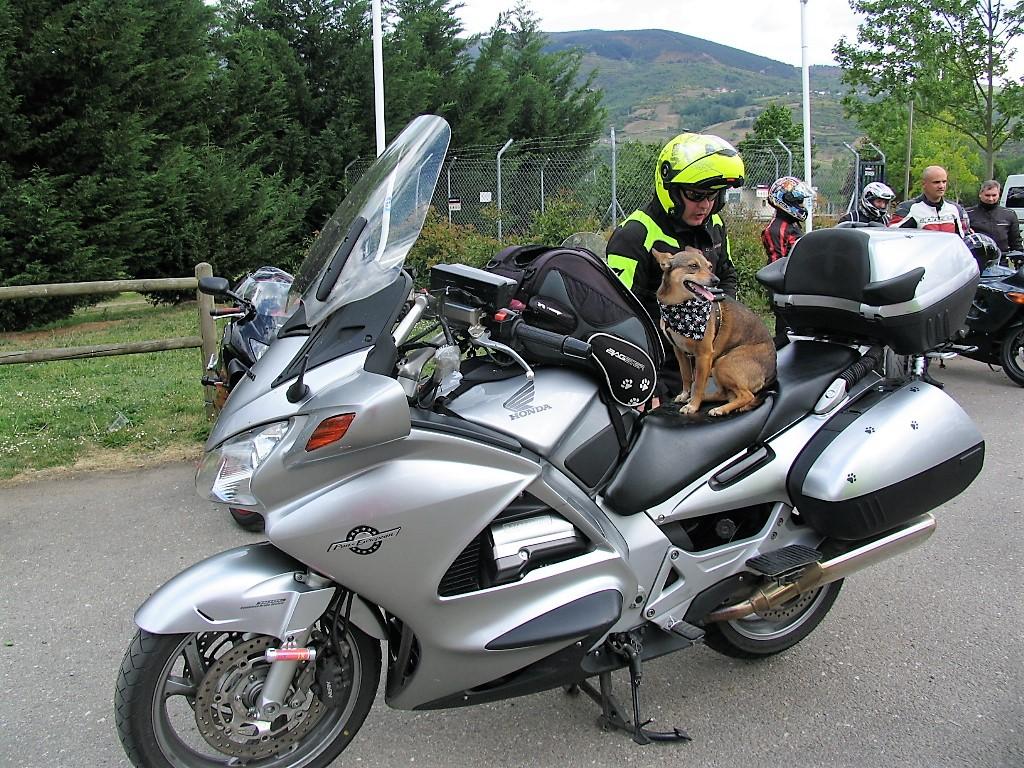 Vulcan, la perra motera preparándose para la ruta