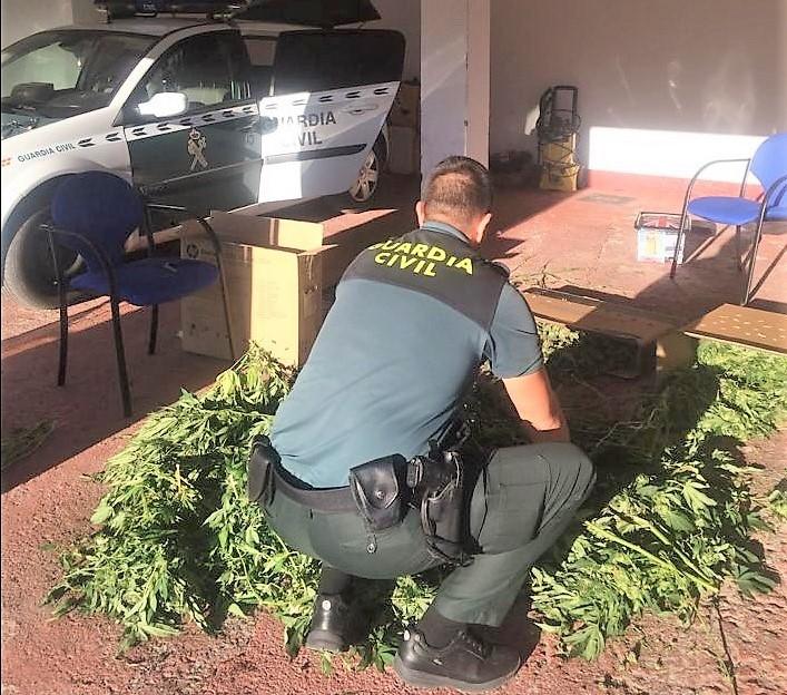 La Guardia Civil de A Rúa interviene 22 kilos de marihuana a un vecino