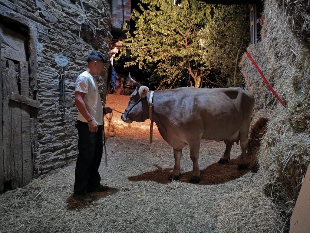 La vaca Juanita, en Gran Hermano