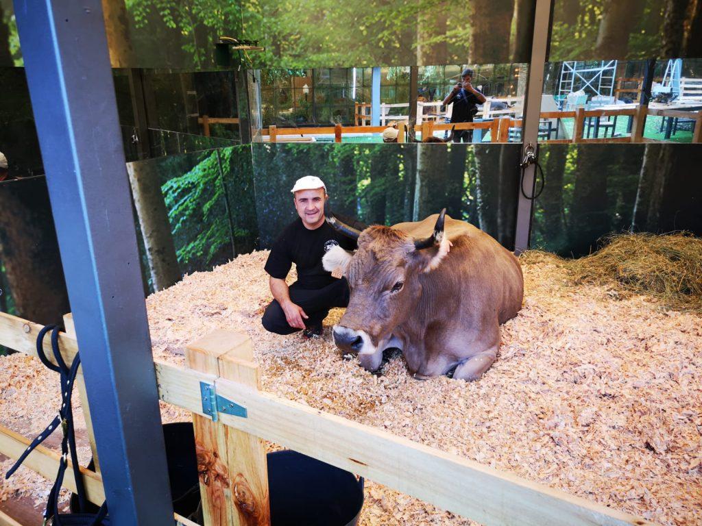 """Mario Nogueira y su vaca, """"Juanita"""", en Gran Hermano"""