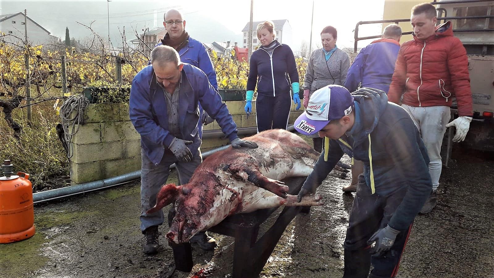 La matanza del cerdo: la supervivencia de una tradición