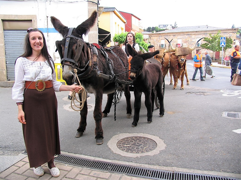 Burros en Feria Petin 1812